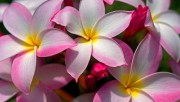 Flowers and Gardens HQ wallpapers Collection 1 Fe3e57108224241