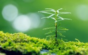 Green Plants Birth HD Wallpapers 0b4529108973552