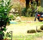 12.11.2008 Hambourg - studio Adb36b145852147